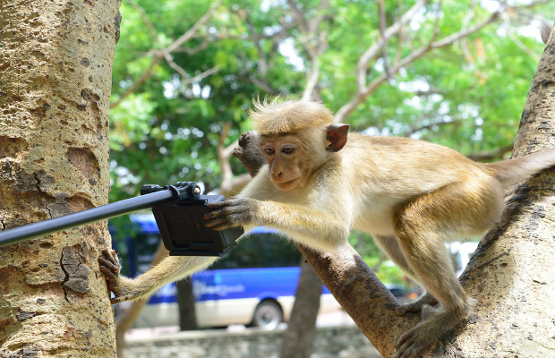 PETA's 'monkey selfie' case reaches settlement