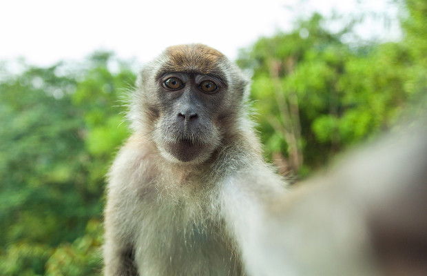 PETA to appeal against 'monkey selfie' ruling