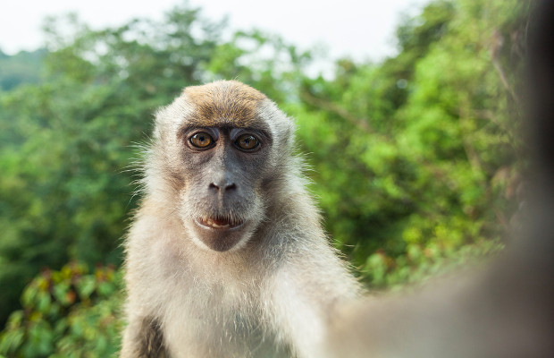 'Monkey selfie' copyright claim rejected