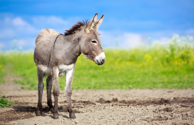 INTA 2016: Donkeys, Republicans and disparaging marks