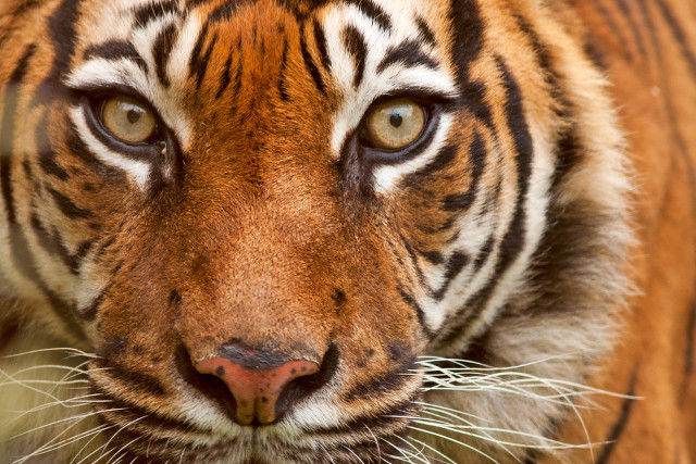 Republican candidate hit with 'Eye of the Tiger' copyright lawsuit