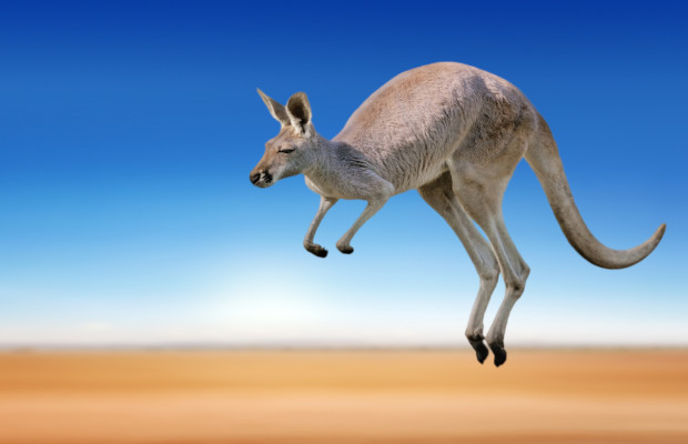 3D kangaroo TM appeal bounces at EU court