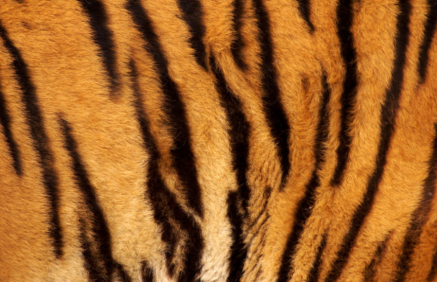 Malaysia jurisdiction report: The tale of the tiger stripes