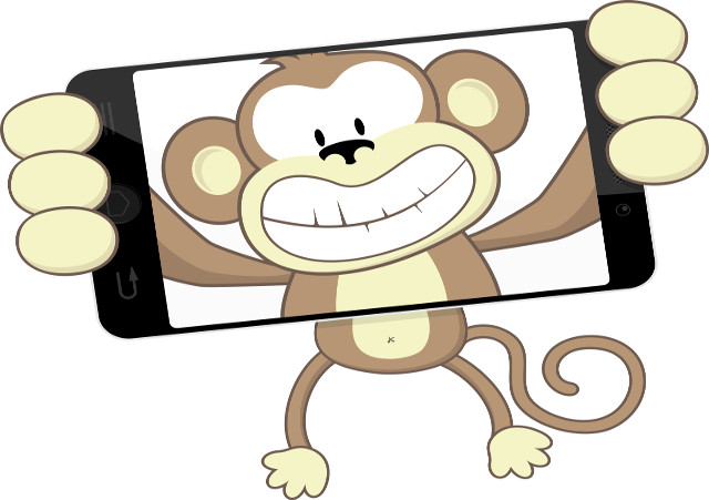 WIPR survey: No room for monkey business in copyright law