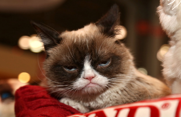 Grumpy Cat claws out at coffee maker